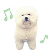 愛犬ブラン